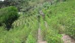 Evo Morales promulga ley que casi duplica área de cultivo de coca en Bolivia